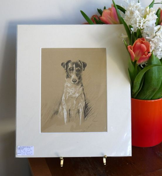 Coloured Smooth haired Terrier 1930's print by Lucy Dawson - Ter D5